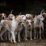 犬の記念日多すぎ問題 ナショナルドッグデー?犬の日??愛犬の日???