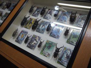 丸瀬布 昆虫生態館 標本 ムシキング