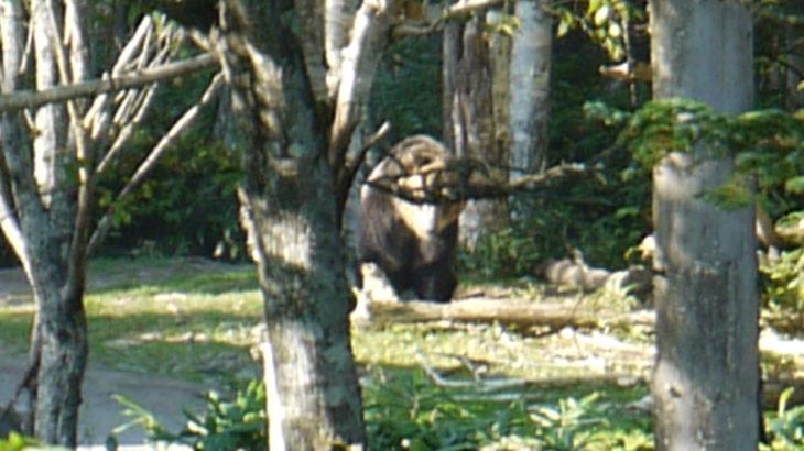 どうやらここは餌場になっているようで、バスも到着して間近でヒグマを観察できるようでした。