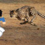 チーターに狙われたらどう逃げる?世界最速の動物から逃げる方法はあるのか