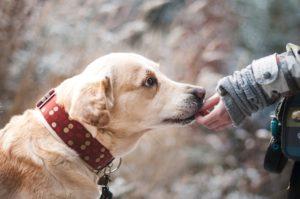 犬 友情 画像