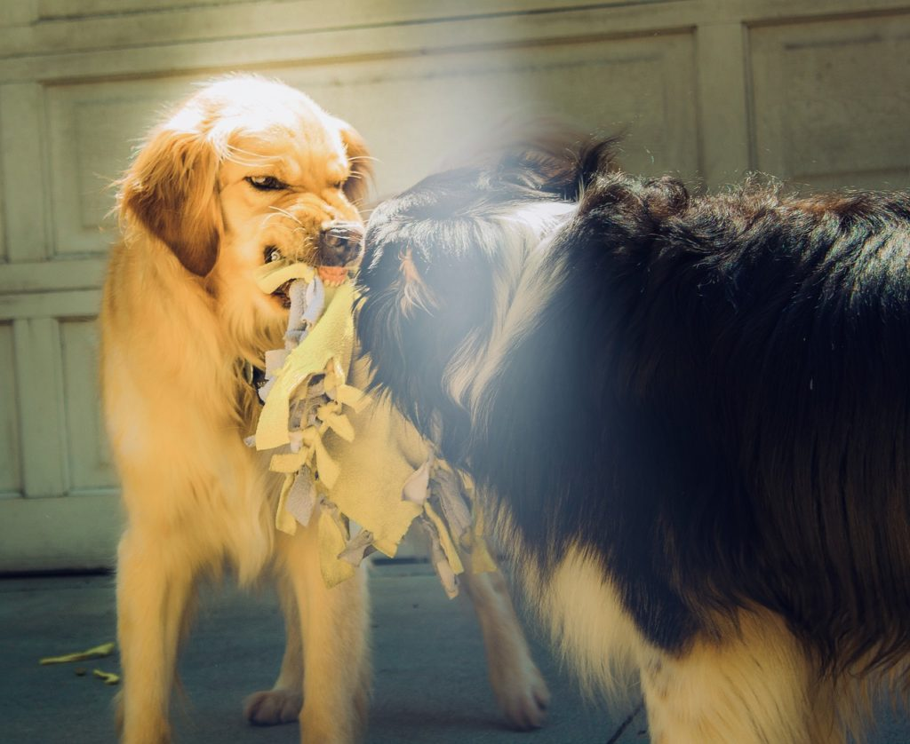 犬 唸る しつけ
