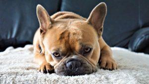 犬 いじける ストレス 画像