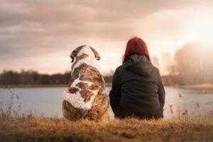 犬 パートナー 画像